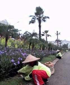 Perawatan taman di Green Lake City oleh Biosis