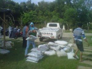 pemupukan taman oleh tim landscaping biosis (2)